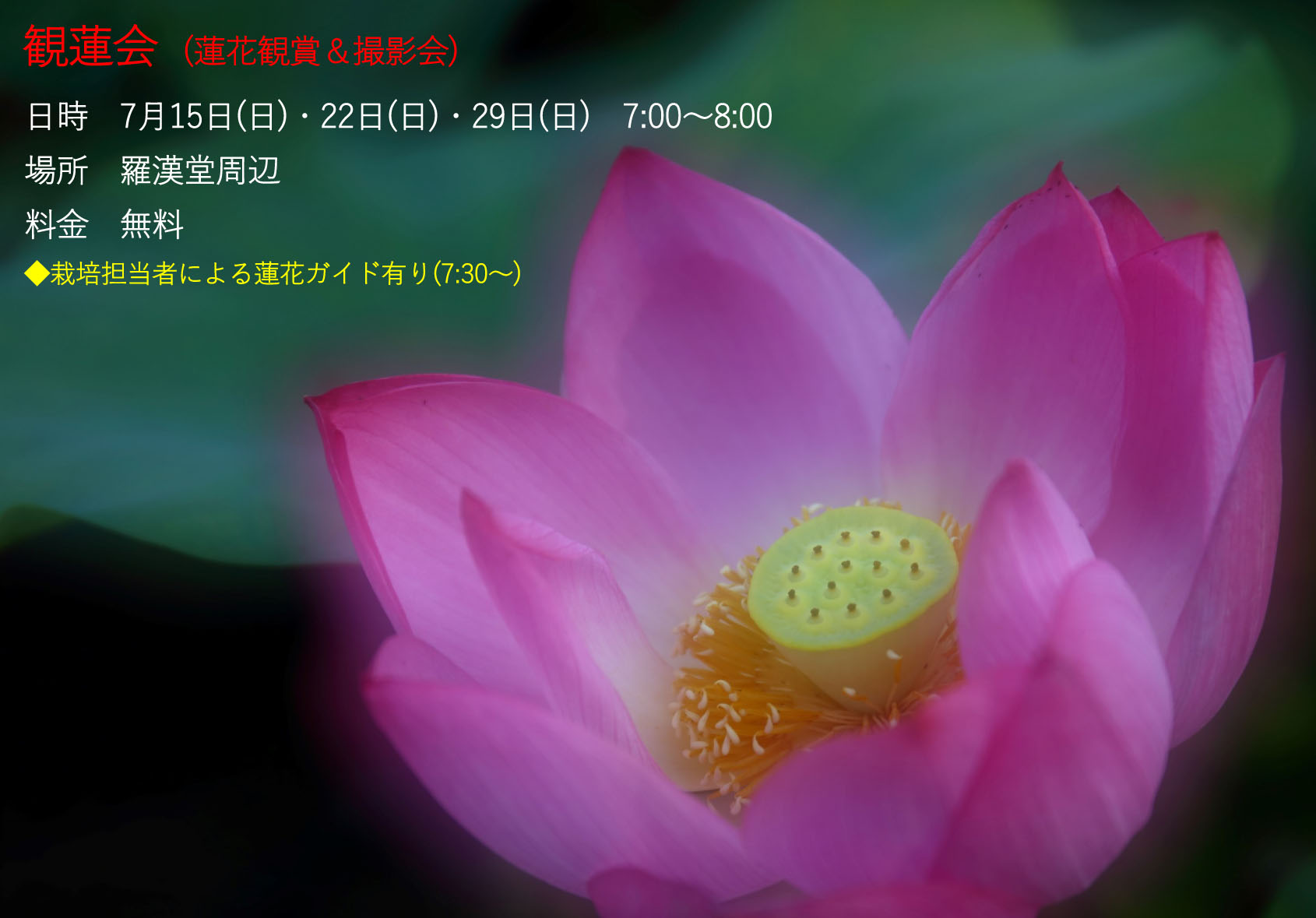 夏蓮祭2018-4